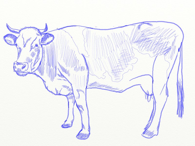 How to Draw a Cow Draw Step by Step
