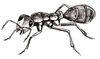 how to draw an ant draw step by step