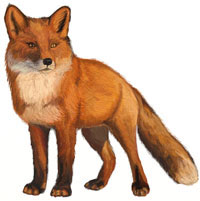 How to Draw a Fox, Animals For Kids, step by step
