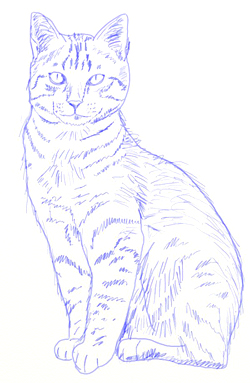 how to draw realistic cats step 6