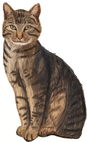 how to draw a realistic cat draw step by step