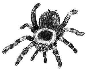 How to Draw a Spider, Step 5