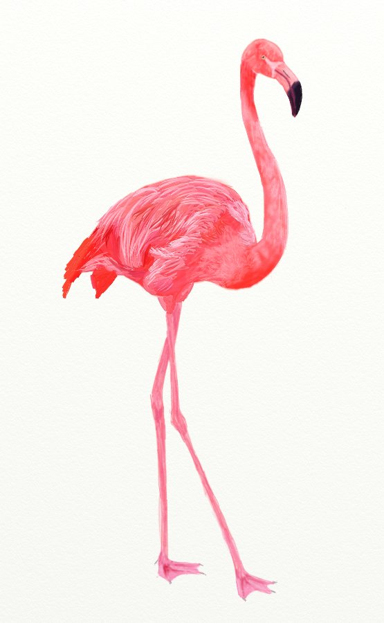 How To Draw A Pink Flamingo Draw Step By Step