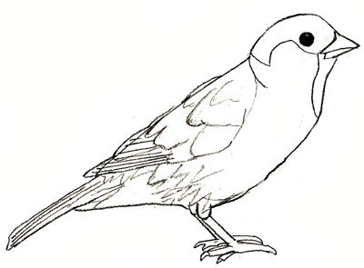 Simple sparrow drawings - photo#8