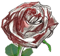 How to draw a Rose Bud, step by step