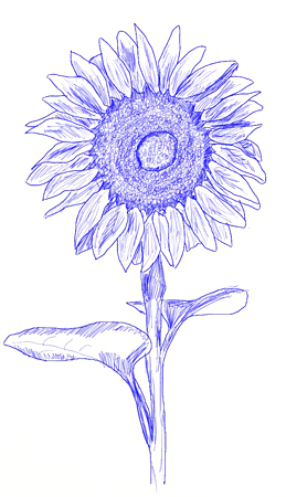 How to draw a sunflower, step 6