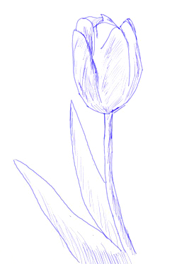 how to draw a tulip flower step 5
