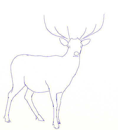Deer drawing step 3