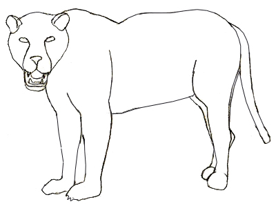 how to draw a jaguar step 5