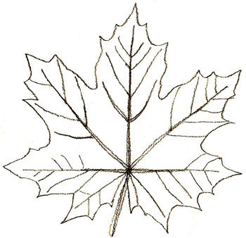 How to Draw Maple Leaves, step 4