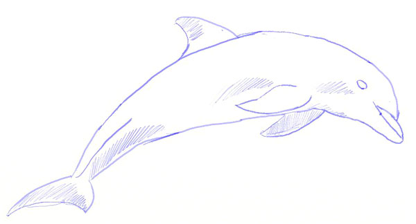 How to Draw a Dolphin, step 5