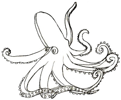 how to draw an octopus step 5