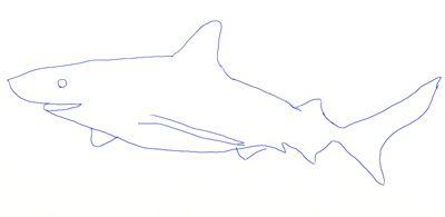 How to Draw a Realistic Shark, step 4