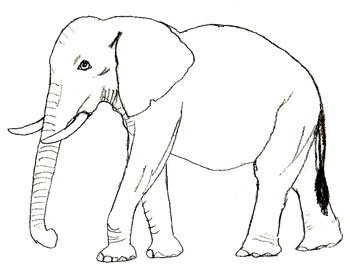 How to draw an Elephant step by step | Easy Drawing for Kids: how.to-draw.co.uk/?s=baby elephant&page=1