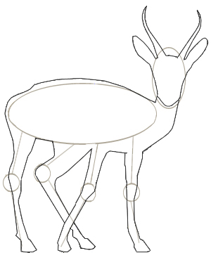 Gazelle head drawing - photo#22