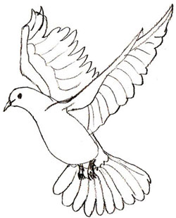 How to Draw a Dove - Draw Step by Step