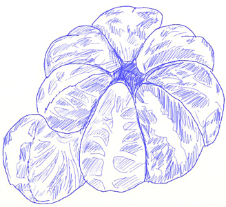 Orange Fruit Drawing Images